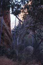 Auf dem Weg zur Mini Palms Gorge