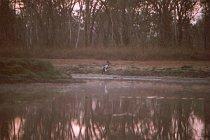 Ein Jabiru auf Beutefang