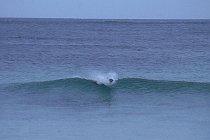 Australischer Seelöwe beim Surfen