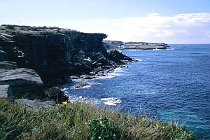 Steilküste bei Coogee