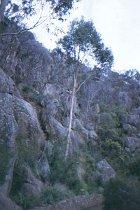 Am Cataract Gorge
