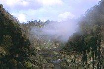 Cataract Gorge mit Morgennebel