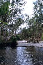 Coen River