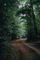 Track durch Regenwald