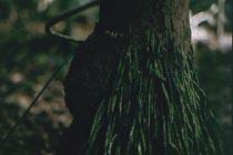 Baumwurzeln und Termitenbau