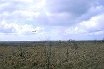 Heathlands Reserve