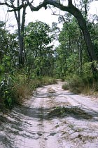 Track am Bertie Creek