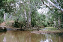 South Alice Creek