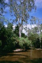 South Alice Creek