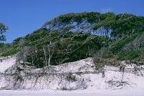 Verformte Bäume