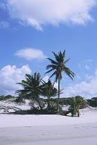 Palmen am Chili Beach