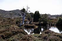 Kleiner See mit Pencil Pine