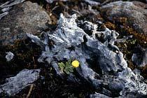 Holz mit Blume