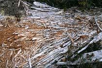 Verrottender Baumstamm