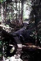 Steg über Cephissus Creek