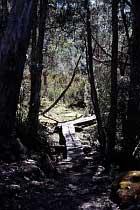 Pine Valley Track