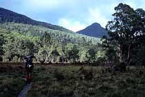 Mt Byron
