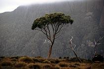 Baum vorm Mount Oakleigh