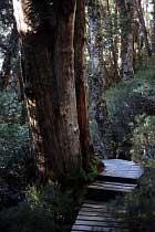 Baum bei Crater Falls