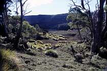 Button Gras am Ronny Creek