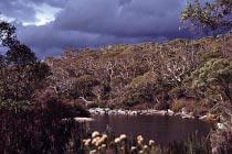 Thredbo River im Juni