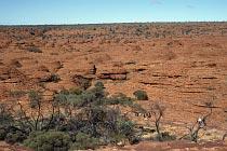 Sandsteinkuppel der Lost City südlich des Canyons