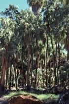 Palmenwäldchen bieten Schatten