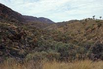 Hügel mit Spinifex-Gras