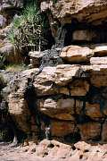 Termitengänge am Fels