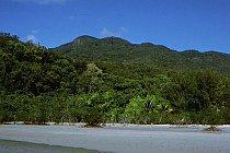 Der Regenwald reicht bis zum Strand
