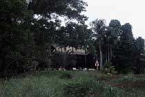 YHA Treehouse